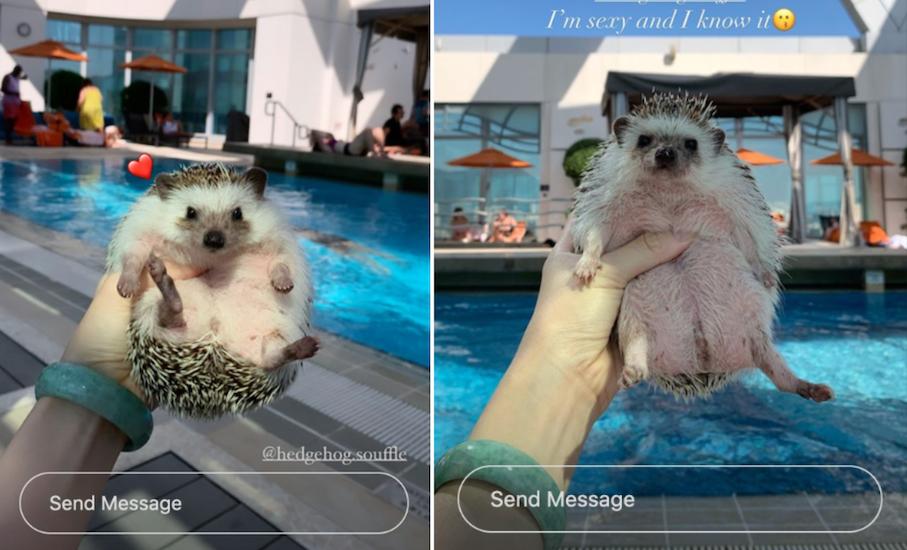 O influenciador acessa o Instagram para reclamar sobre o hotel não permitir que ela tire selfies à beira da piscina com o ouriço