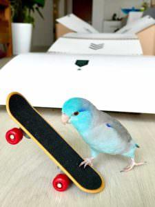 A estrela de 1 ano mais quente de TikTok é uma ave do skate de Cingapura