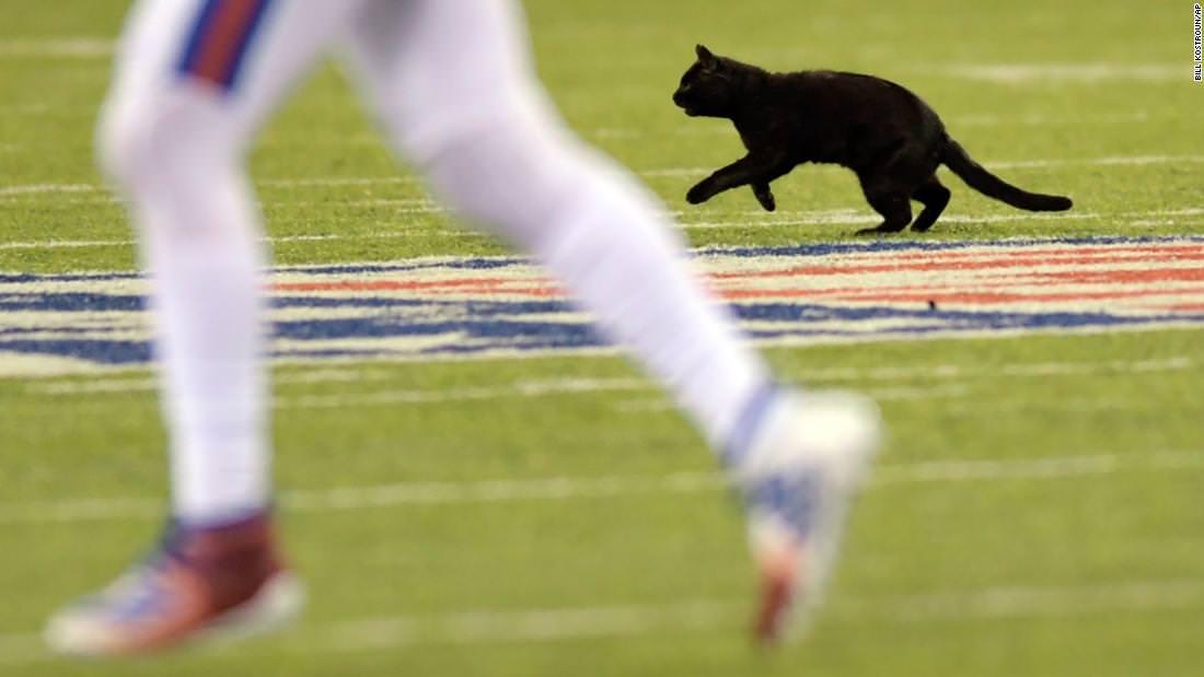 Um gato preto interrompeu um jogo da NFL com um touchdown emocionante e peludo