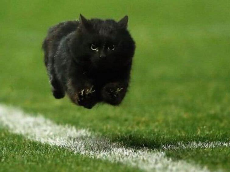 O gato preto no campo de Giants-Cowboys faz o meme de NFL do purrfect – CNET