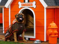 Mascote do adorado Browns Swagger morre aos 6 anos