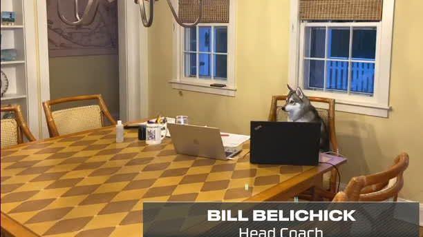 Como o cachorro de Bill Belichick se tornou a estrela da noite da NFL